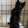 田舎で産まれた黒猫ちゃん♪ サムネイル6