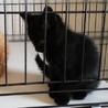 田舎で産まれた黒猫ちゃん♪ サムネイル7