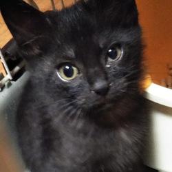 猫の譲渡会@いしじま動物病院待合室 サムネイル1