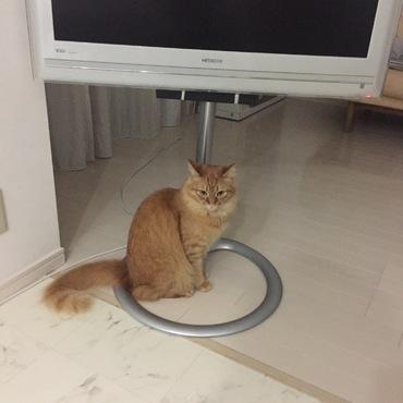 毎日ある移動装置に入るネコ