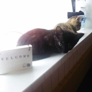 クロ子猫です♪
