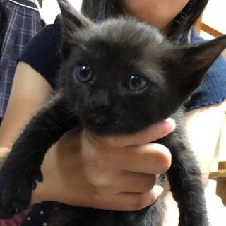 幸運の黒猫ちゃん オス、メス