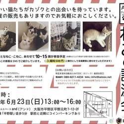 「今週末のおすすめ譲渡会」サムネイル3