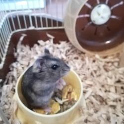 ハムたんの体重
