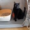 小柄な黒猫【アロマ】 サムネイル3