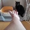 小柄な黒猫【アロマ】 サムネイル5