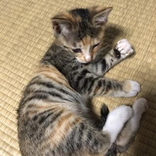 子猫 2ヶ月 女の子!