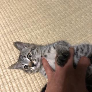 子猫 2ヶ月 女の子