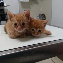 20190623猫の譲渡会