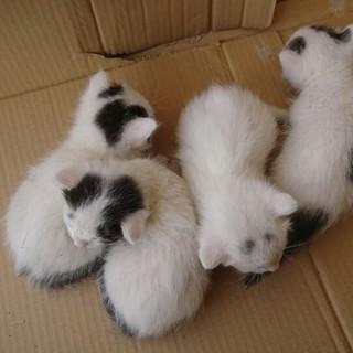 子猫4匹!