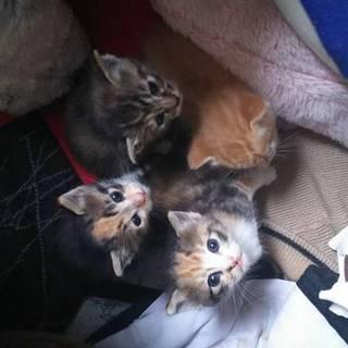 とてもかわいい4匹の赤ちゃんネコ☆