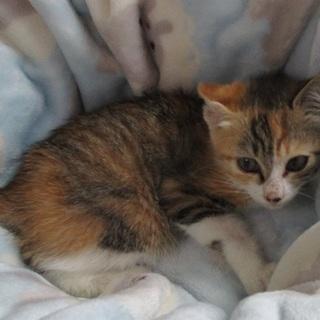 綺麗な三毛子猫