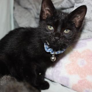 人懐こいおっとり黒猫 はいんつ君