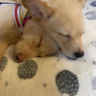 子犬3ヶ月★4頭★オスメス雑種★埼玉より