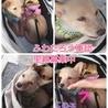 子犬3ヶ月★4頭★オスメス雑種★埼玉より サムネイル3