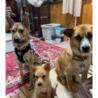 子犬3ヶ月★4頭★オスメス雑種★埼玉より サムネイル4