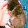 乳飲み子猫のお世話