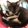 子猫4匹保護しました、助けて下さい!!〜その3