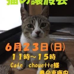 釧路 猫の譲渡会