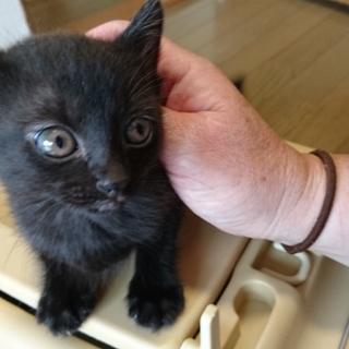 よくなつく黒猫の女の子