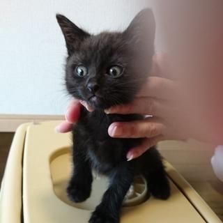 よくなつく黒猫の男の子