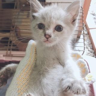 保護した子猫、里親募集。