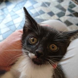 よくなつく白黒猫の女の子
