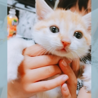 可愛い子猫ちゃんです。