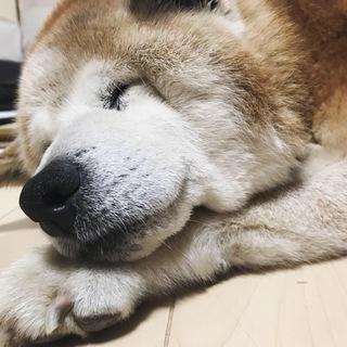 老犬ジョンGを家族に迎えてください。