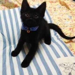 【6/23東日本橋】2ヶ月♡黒猫ルカくん