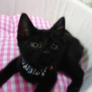 【6/23東日本橋】2ヶ月♡黒猫ノアくん