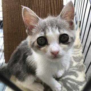 白グレーの美猫ちゃん 019