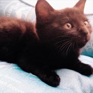 人馴れ抜群❗人が大好きな黒猫の子猫ちゃん