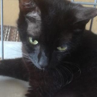 撫でられるのが好き1才の黒猫ちゃん