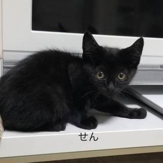 海辺の黒子猫せん♂1kg