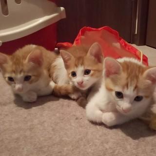 甘ったれな3兄弟