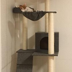 保護猫の室内フリー飼いについて
