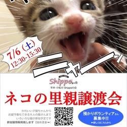 ネコの里親譲渡会@船堀・北葛西で開催!