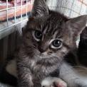 犬猫同居中!魅惑の白いアイライン 推定2ヶ月