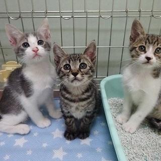 【動画あり】4月17日生まれの子猫