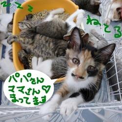 保護猫広場ラブとハッピー譲渡会