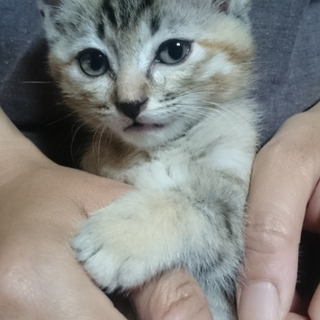 保護した子猫の里親さん募集