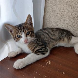 生後2ヶ月の子猫。