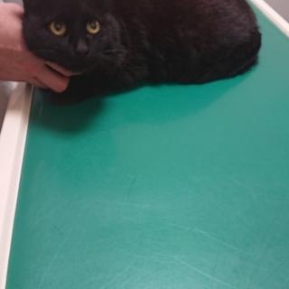とても優しく穏やか★ジジ★黒猫女子