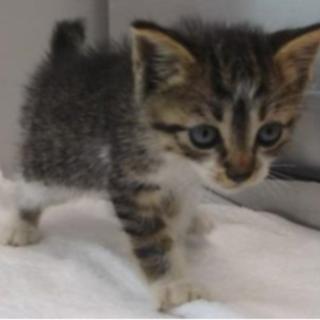 まだ幼い子猫です。収容期限7/1朝迄