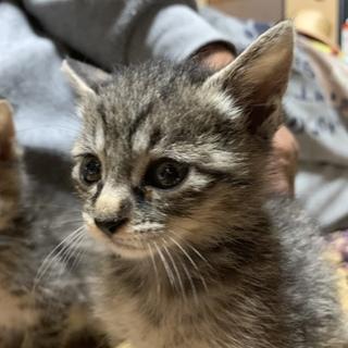 1ヶ月半位の子猫