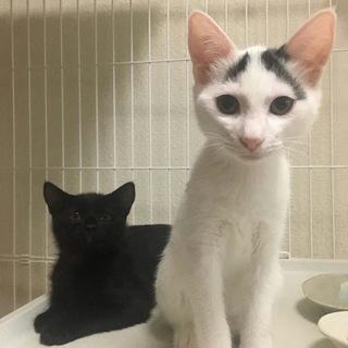 PQ24 黒猫と白黒の兄弟