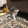 元気で甘えんぼの子猫です サムネイル2