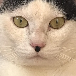 味のある猫ちゃん その名もチャップリン