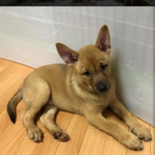 生後3か月弱仔犬 男の子